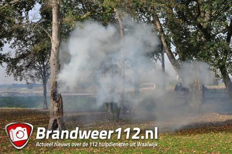 Boom in brand aan de Winterdijk Waalwijk