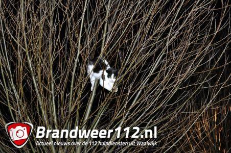 Jong poesje zit met pootje vast in boom aan De Gaard Waalwijk
