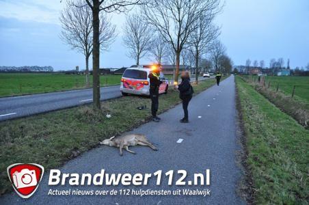 Schoolbusje rijdt hert aan op weg tussen Waalwijk en Heusden