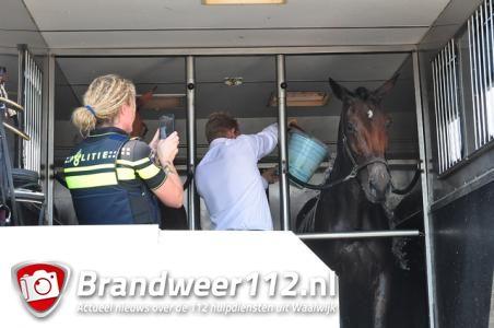 Geen water en verkoeling: paarden staan ruim uur in brandende zon en gaan tekeer, omstanders woedend