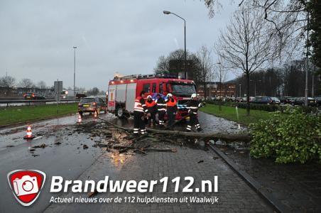 Verkeer heeft last van boom op wegdek aan de Taxandriaweg Waalwijk