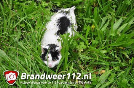 Kat vermoedelijk gered van verdrinkingsdood aan de Gansoyensesteeg Waalwijk