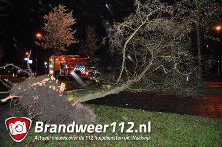 Grote boom op wegdek aan de Akkerlaan Waalwijk