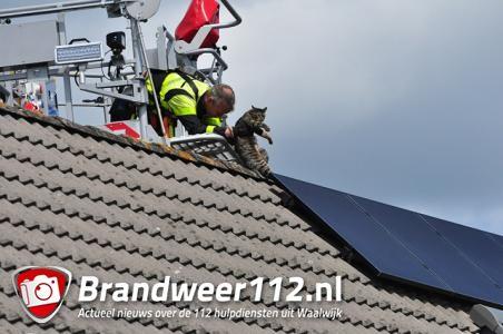 Kat vast onder zonnepanelen Waalwijk, brandweer redt diertje met hoogwerker