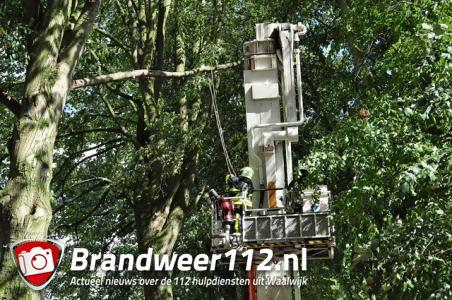 Gevaarlijke hangende tak aan de Winterdijk Waalwijk
