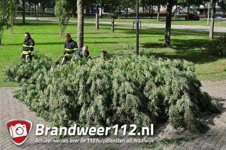 Grote tak belandt op wegdek aan de Industrieweg Waalwijk
