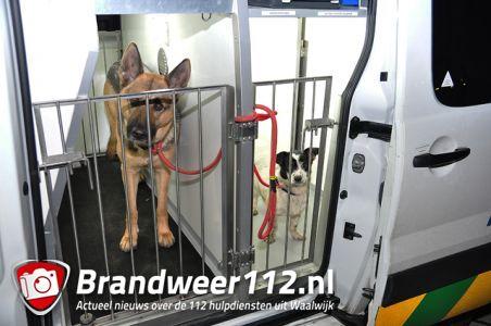 2 vermiste honden terug gevonden aan de Spuiweg Waalwijk