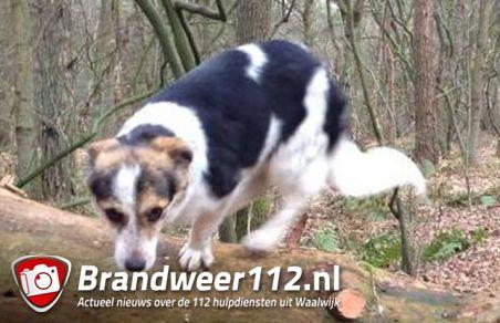 UPDATE: Hond Ona vermist na ongeluk op A59 (Maasroute) Waalwijk