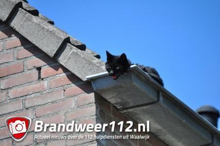 Kat zit ruim een uur op warm dak in Waalwijk
