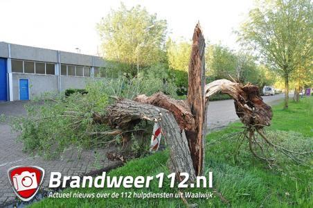 Boom op wegdek aan de Zanddonkweg Waalwijk
