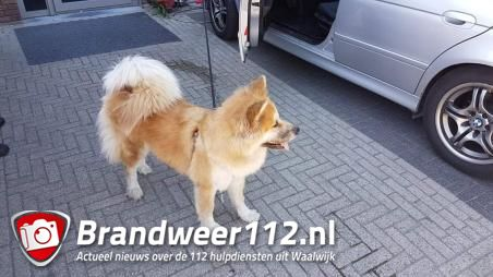 Hond zit twee uur in snikhete auto aan de Grotestraat Waalwijk