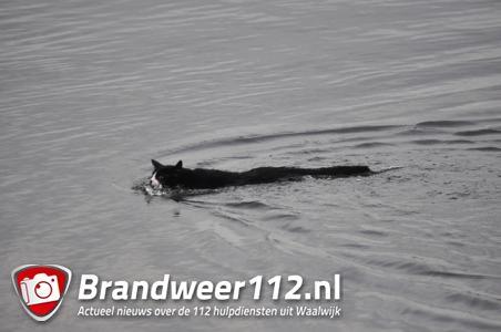 Kat wil niet uit boom gered worden en neemt een duik in Waalwijkse sloot