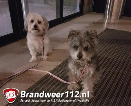 Beveiligingsbeambte treft twee achtergelaten hondjes aan in winkelcentrum de Els