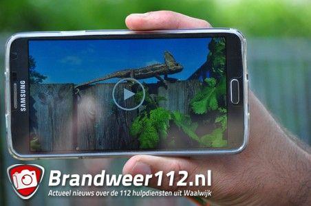 Kameleon vlucht boom in aan de Wilhelmina Druckerstraat Waalwijk