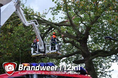 Grote gevaarlijke hangende tak boven wegdek aan de Burgemeester van der Klokkenlaan Waalwijk