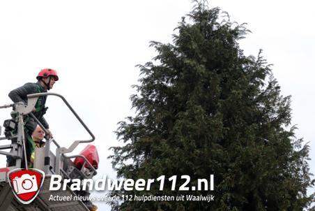 Brandweer rukt uit voor een kat in de boom aan de Franz Lehárpark Waalwijk