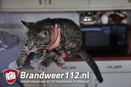Jong poesje zit uur lang vast in luchtventilator aan de Esdoornstraat Waalwijk