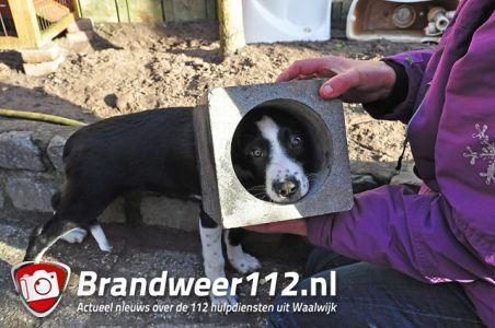 Hondje zit ruim 1 uur vast in betonnen lampenkap aan de Coubertinlaan Waalwijk