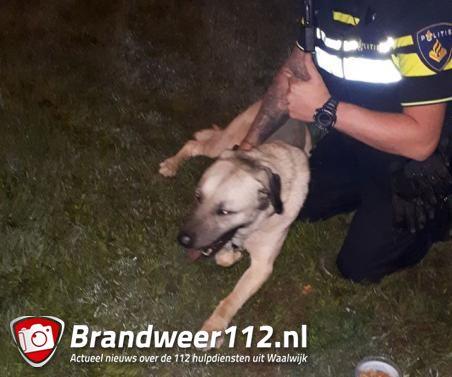 Hond loopt Midden-Brabantweg over in Waalwijk