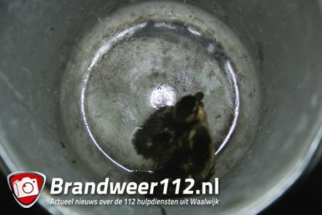 Brandweerlieden schieten te hulp in Waalwijk: twee eendjes gered