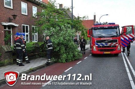Boom op wegdek aan de Wilhelminastraat Waalwijk