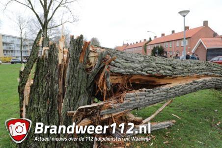 Boom valt op huis in Baardwijksestraat Waalwijk