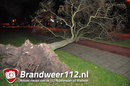 Wind legt boom plat aan de Akkerlaan Waalwijk