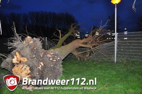 Flinke boom op wegdek aan de Zomerdijk Waalwijk