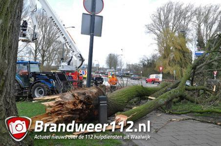 Boom dreigt om te vallen op brandweerkazerne aan de Hertog Janstraat Waalwijk