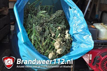 UPDATE: 165 hennepplanten in woning aan de Lijsterbesstraat Waalwijk
