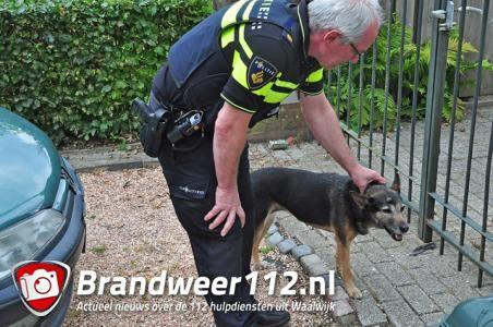 Hond zorgt voor verkeersproblemen op Valkenvoortweg in Waalwijk