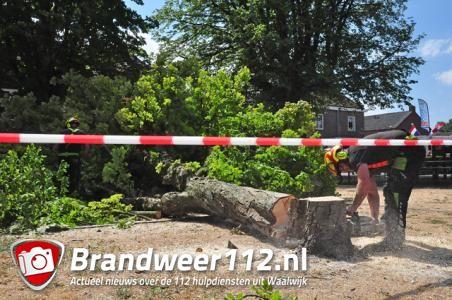 Boom staat op omvallen bij speeltuintje aan het Sint Antoniusplein Waalwijk