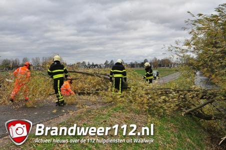Boom omgewaaid op wegdek Waalwijk