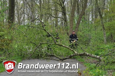 Boom valt bijna op fietser aan de Vijverlaan Waalwijk