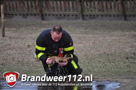 Lammetje gered uit ijskoud water in Waalwijk