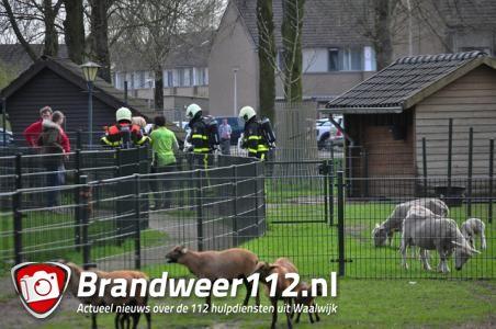 Gaslek door ijverige medewerker van kinderboerderij in Waalwijk