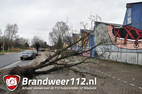 Boom valt om op parkeerplaats bij schoenenmuseum aan de Elzenweg Waalwijk